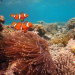 La Gran Barrera de Coral, una maravilla natural